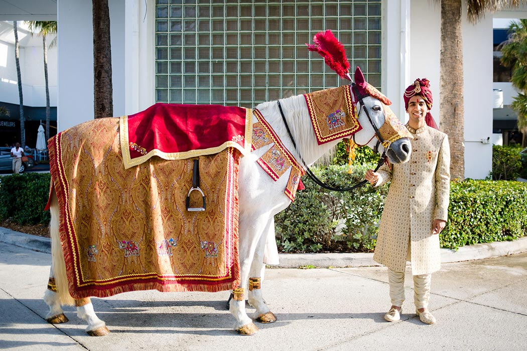 indian groom posing with white baraat horse during wedding celebrations in south florida